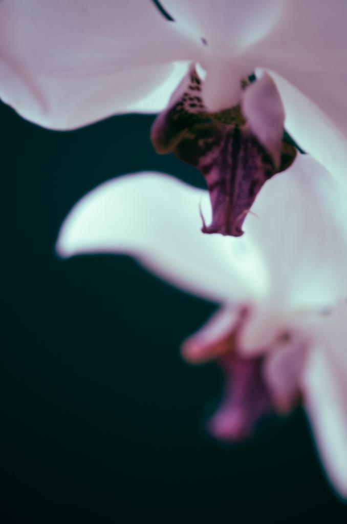 Flores-1-2253