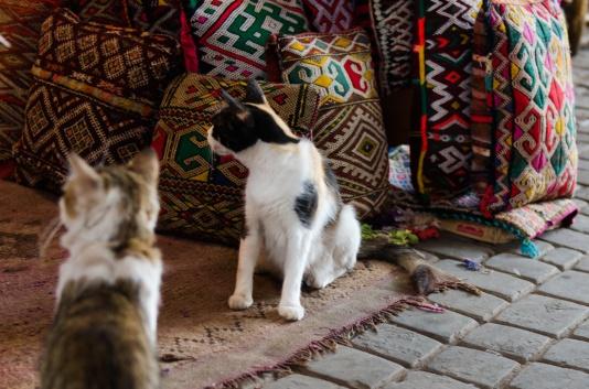 Marrakech-0413