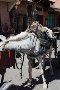 Marrakech-1901